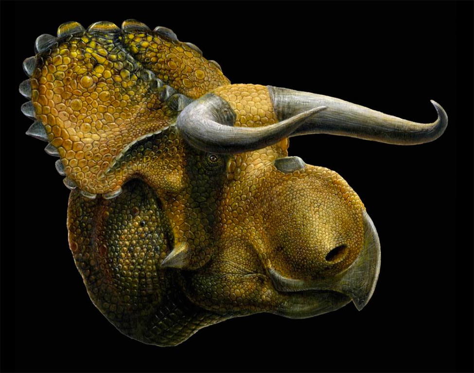 . Courtesy | Lukas Panzann  An artist�s version of the newly named horned dinosaur Nasutoceratops titusi discovered in Grand Staircase-Escalante National Monument in southern Utah.