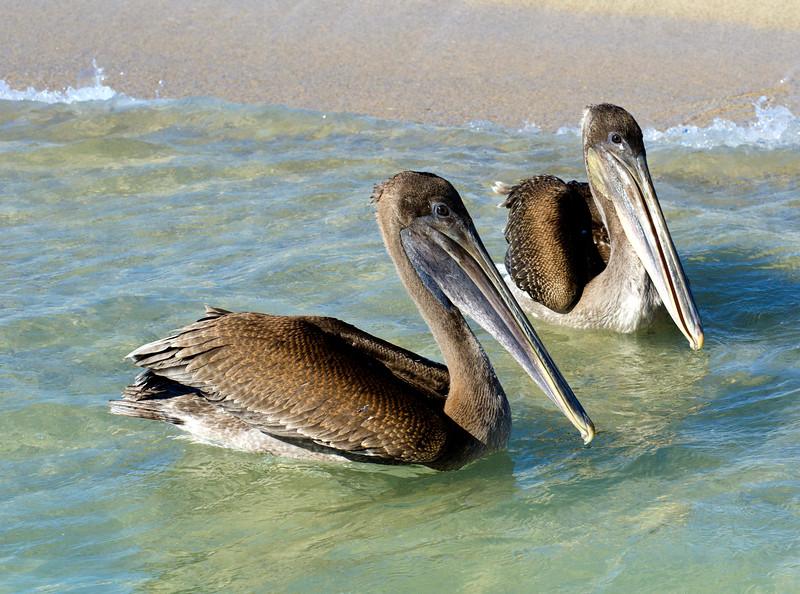 Galapagos-93-2.jpg