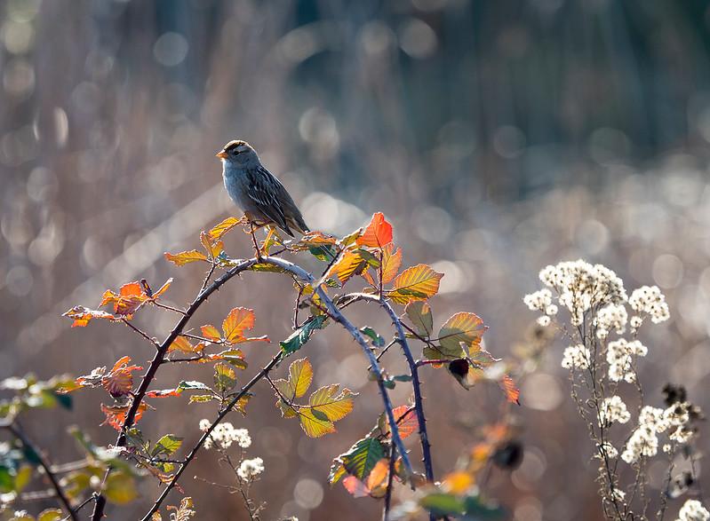 bokeh bird.jpg