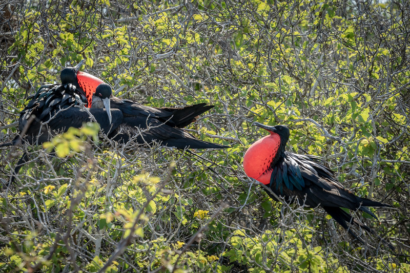 Galapagos-4018.jpg