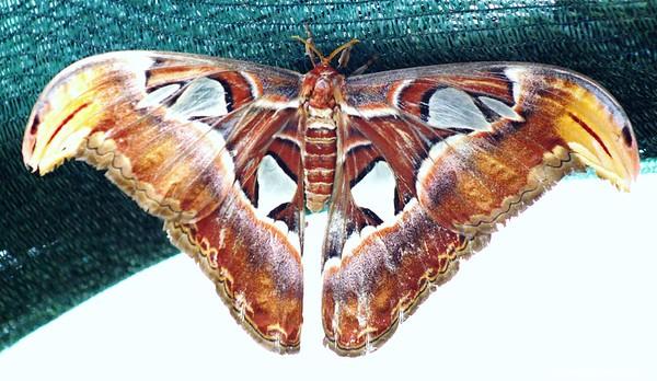 Butterflies & Moths. Set 2