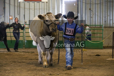 Breed Shows