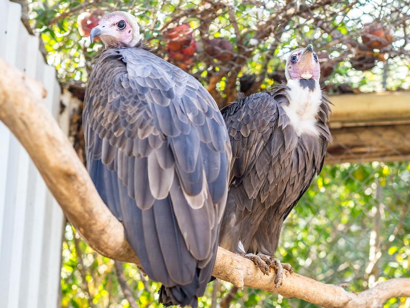 Melios Zoo