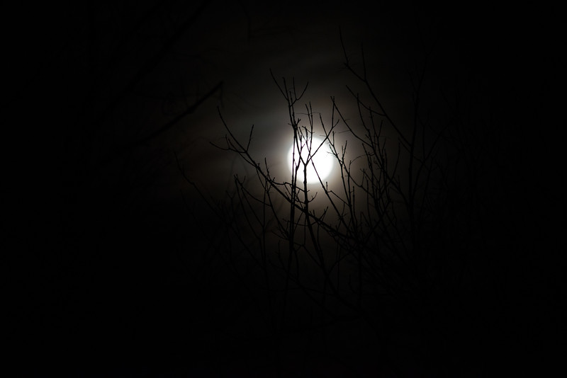 Twigs in the Super Moon (black and white)