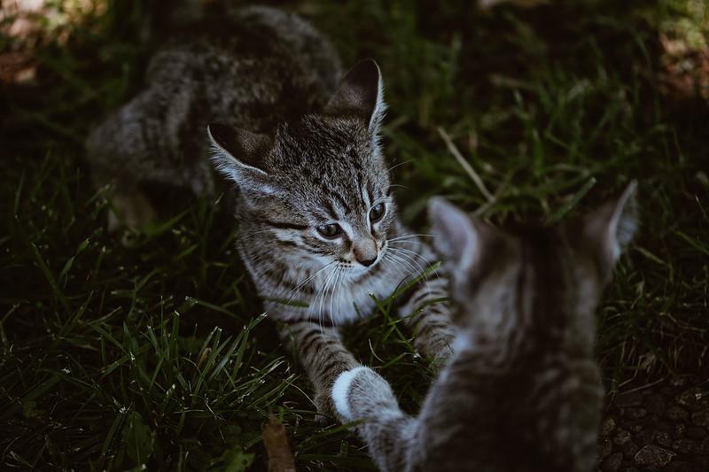 Girls & Kittens, July 1st - 15.jpg