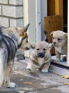 Images from folder 2013-06-15 4 Puppybezoek Markelo