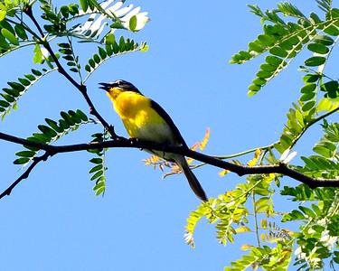 2015 Birds