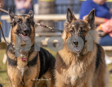 Big Bonz Dog Rescue Event-Southwest Florida German Shepherd Rescue Inc.
