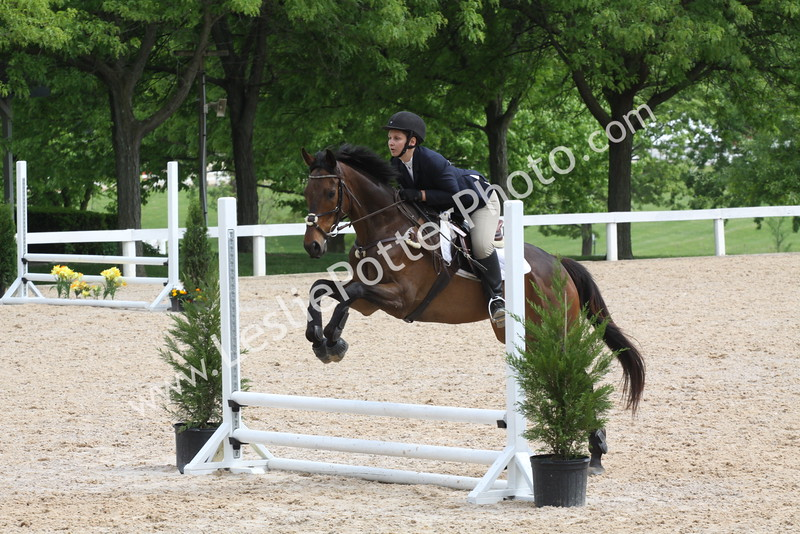 Thoroughbred Horse Shows
