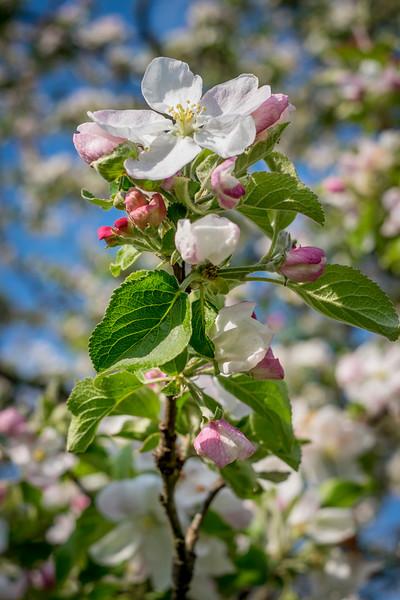 spring_15_020.jpg