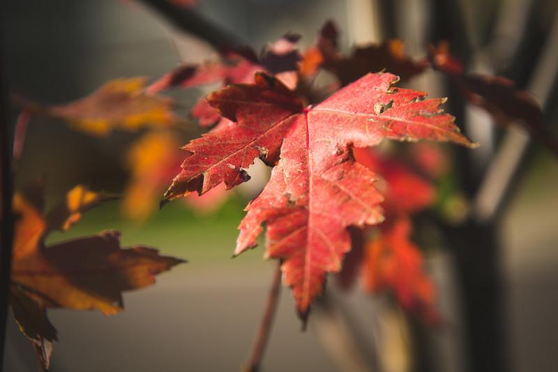 20151024-Fall Colors-144.jpg