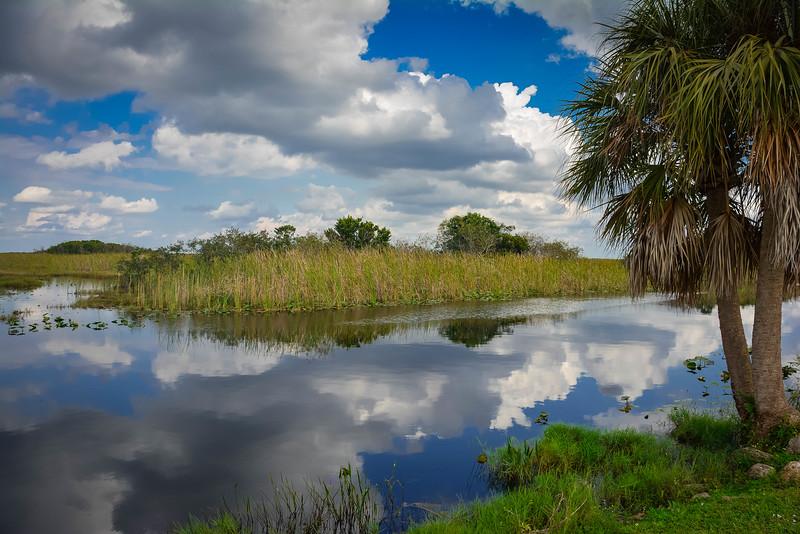 Everglades-2.jpg