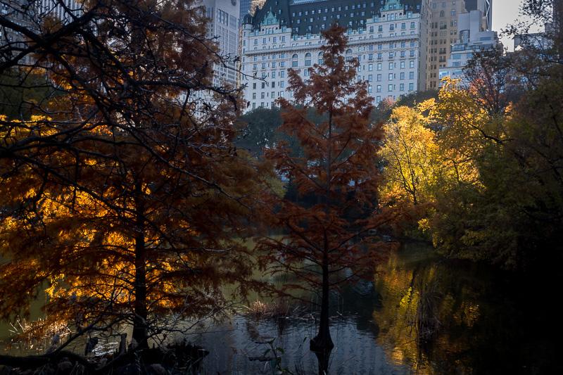 November 21 - Central Park, NYC.jpg