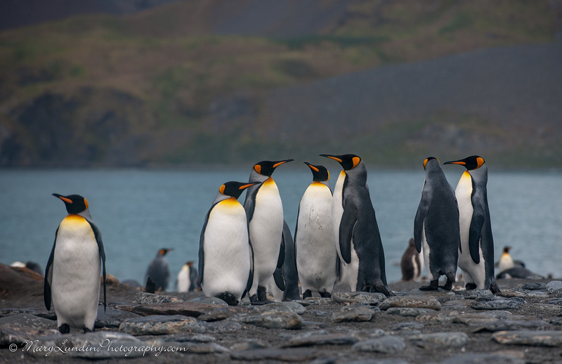 Antarctic-113