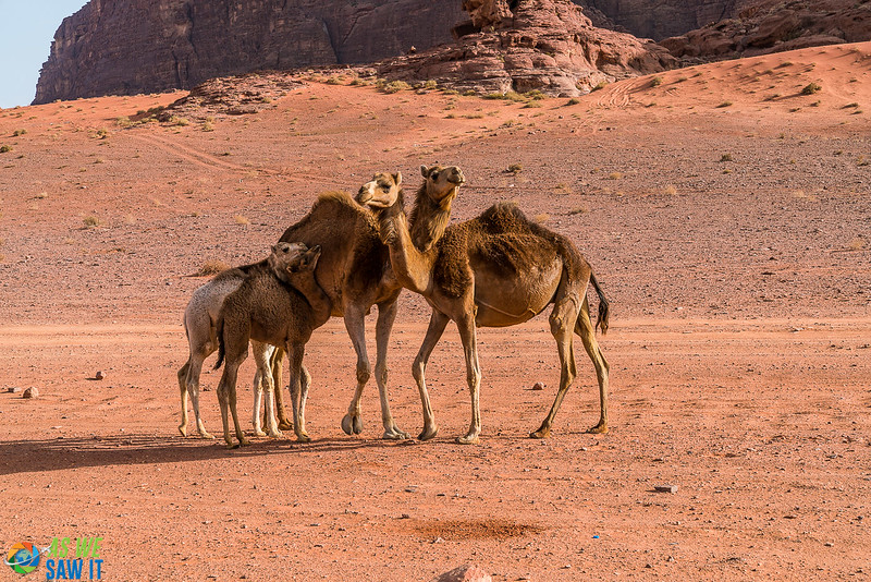Wadi-Rum-05224.jpg