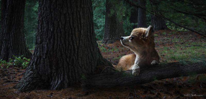 dog-forest-2.jpg
