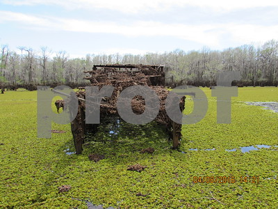 biologists-battle-giant-salvinia-blocking-access-for-duck-hunters-waterfowl