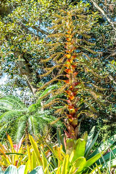Royal-Botanic-Garden-1042.jpg