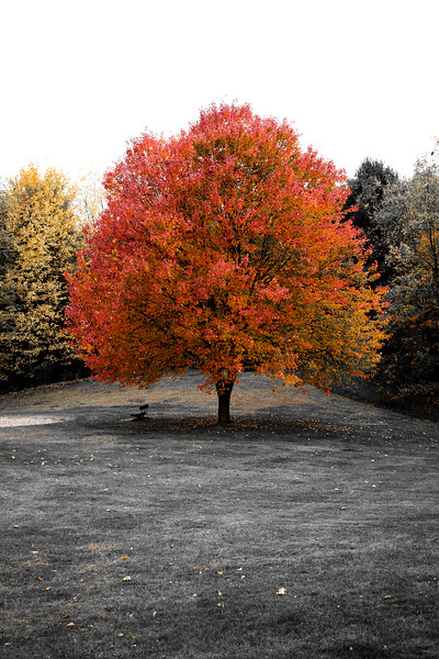Foliage v.1-1.jpg