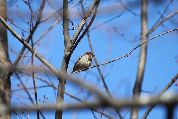 Spring Birds - 4/5/2014