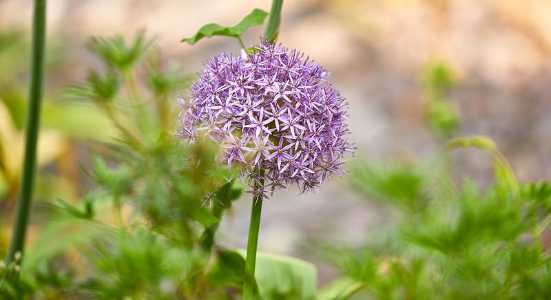 Flowers-5445.jpg