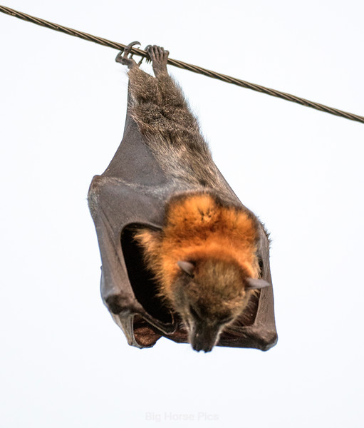 flying fox 4.jpg