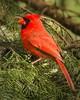 0026 - Cardinals 5-16-13 (27 of 41)-Edit-Edit