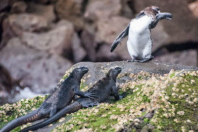 Rick's Images of the Galapagos Islands