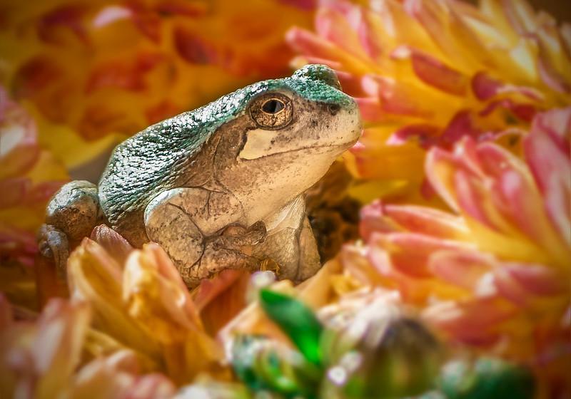 tree frogsmug.jpg