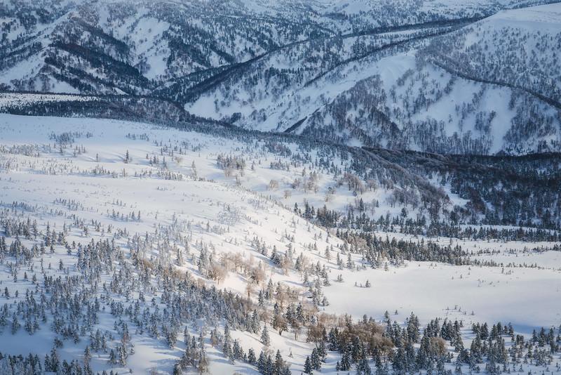 Snow, Trees, and Light In Hakkoda Mountains