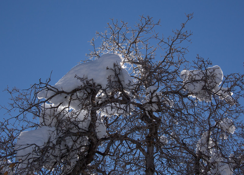 Snow on Kolob Terrace Road