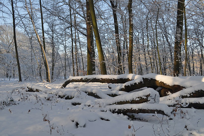 December 2010 winterwandeling