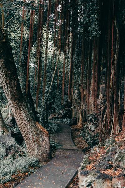Hawaii20-52.jpg