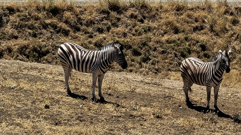07-05-2021 Winston Wildlife Safari-16.jpg