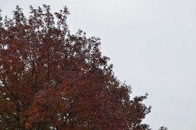 2011-12-13 - Fall Leaves