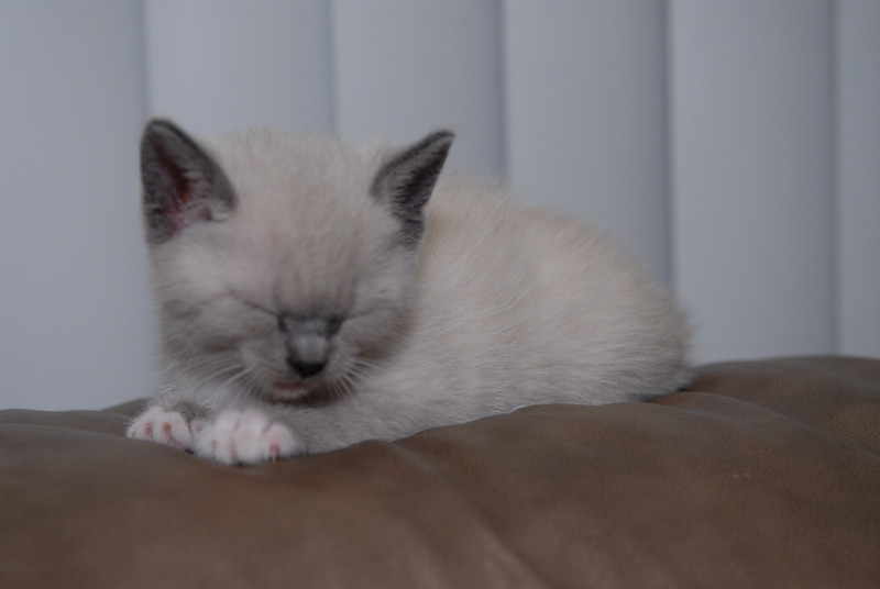 2007 04 12 - New Kitty 076.JPG