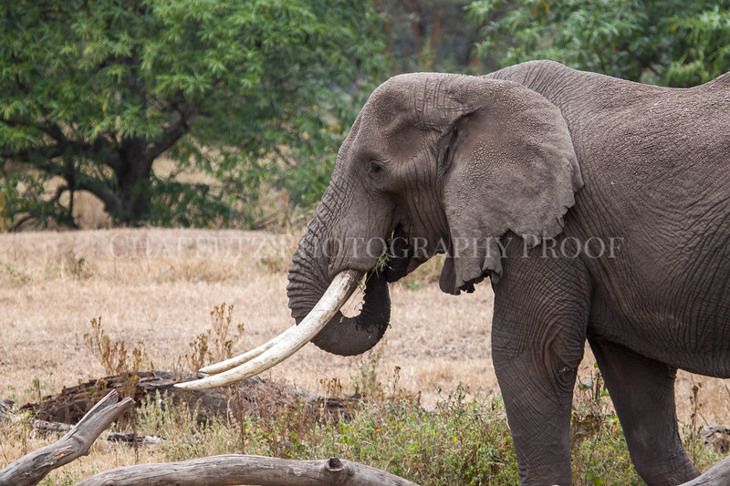 ElephantEating.jpg