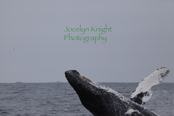 Oceanic Society Whale Watching Trip 8/25/18