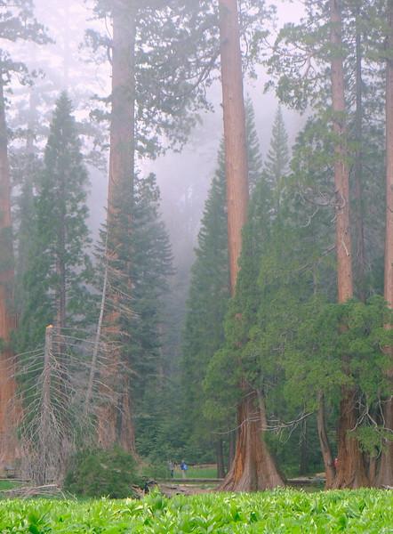 California Day 6 Sequoia 05-30-2017 106.JPG