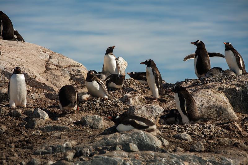 _MG_8822_20170123_Antarctica.jpg