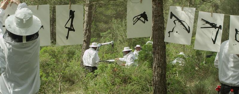 Campaña firmas abejas