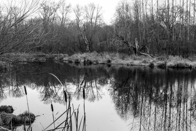 Pond reflections.