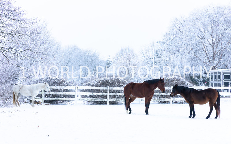 202101042021_1_4 Snow Scenes with Church, horses054--3.jpg