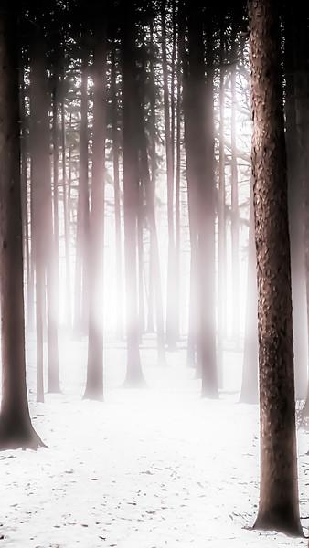 Morton Arboretum Fog 2/28/21