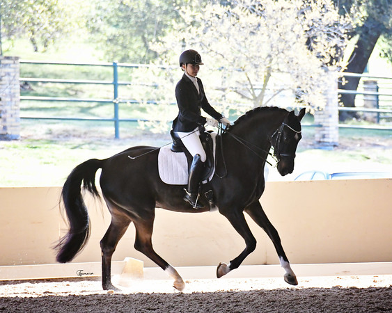 Golden State Dressage March Mania
