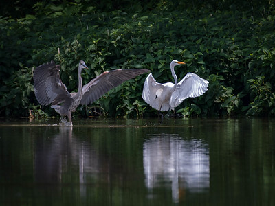 Birds on the creek