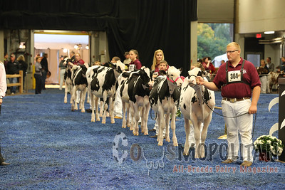 WDE Junior Holstein Hfrs 2015