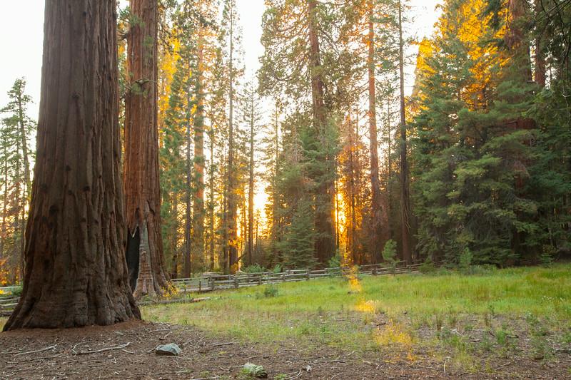 20140823_sequoia_0032.jpg
