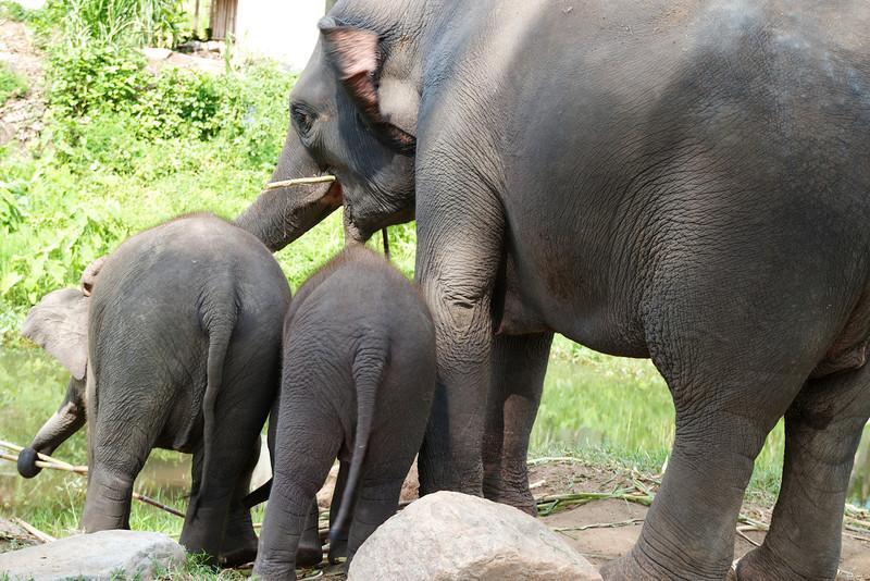 Roewe_Thailand 134.jpg