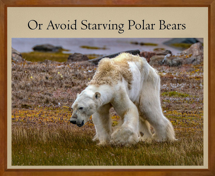 STARVING_POLAR_BEAR.jpg